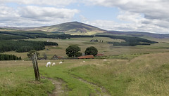 cabrach (judmac1) Tags: cabrach banffshire scotland moorland grazing deserted croft thebuck forest ngc