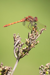 0J9A9078 (wearedave) Tags: brandonmarsh dragonfly