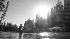 Fly Fishing Alberta