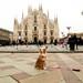 Laika in Milan