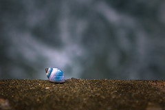 Tiny Being (Satbir Singh Kukreja) Tags: travel small shell world depth subject survival beach macro water sea creative ocean beautiful wild wave sealife tiny traveldestination cotw3