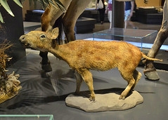 BERLIN, GERMANY - Natural Science museum/ ,  -    (Miami Love 1) Tags: horse museum museo caballo berlin