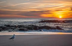 walking gull-0096 (kendrajwp) Tags: asbury asburypark beach february2016 ocean sunrise