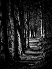 The Wooded Trail (Inge Vautrin Photography) Tags: trail path light danmark denmark europe europa viborg dollerupbakker blackandwhite bw monochrome forest mood nature outdoors outdoor outside skov sti trees