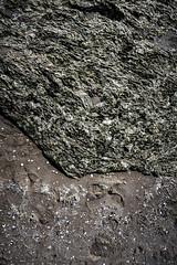 2016 low tide (mark-heuss) Tags: romo röm denmark dänemark strand urlaub holiday kids mio lieselotte antonia daniel isabel nordsee lowtide tide gezeiten wattenmeer watt seetang plankton shells muscheln