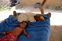 Lambs to a slaughter (shahmurai) Tags: fujifilmxt1 nagarparkar thar sindh pakistan baby lamb villagelife