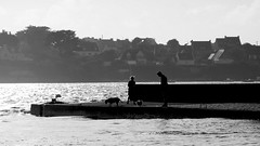 High tide (patrick_milan) Tags: noiretblanc blackandwhite noir blanc monochrome nb bw black white landscape sea mer iroise water plouguin saint pabu brittany bretagne saintpabu ploudalmezeau porsall finistre
