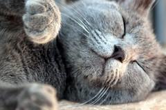 Dreaming a little fish... (modestino68) Tags: gatto cat