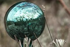 Reflection (lapideo) Tags: reflection green mirror globe spiegel bowl spiegelbild kugel