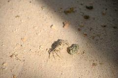 DSC_3142b La Digue, Seychelles: Anse Union (wanderlust  traveler) Tags: ocean africa blue sea panorama nature landscape island rocks paradise palmtree tropical seychelles ladigue torquoise