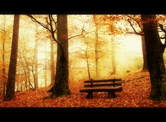 Tranquilize (BphotoR) Tags: november autumn light leaves fog forest germany bench nebel hessen herbst bank foliage herbstwald odenwald bergstrasse abigfave tranquilize forestofodes canonpowershotg10 bphotor jesuscmsfavoritesgallery
