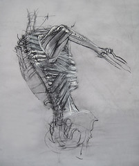 Serratus_Posterior1 (artsentinel) Tags: skeleton charcoal anatomy figuredrawing charcoaldrawing artstudentsleague lifedrawing sketchbookdrawings artisticanatomy lifeclass subwaysketches classicrealism subwaysketcher keithgunderson woodstockschoolofart keithgundersonartist