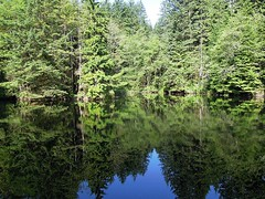 Rice Lake reflections (Matthew Wild) Tags: trees wild lake canada nature water vancouver fishing bc view natural walk britishcolumbia hike northvancouver wilderness backwoods gvrd angling ricelake lynnheadwatersregionalpark
