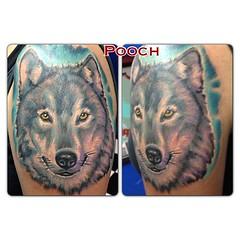 1 1/2 hours #wolf #wolftattoo