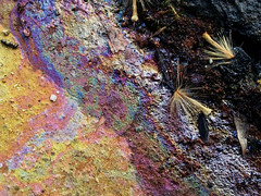 Duke Gardens March 2013 (jungle sheila) Tags: abstract texture parkinglot oil psychedelic asphalt android dukegardens