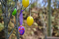 Lihavttevaheaeg on alanud! (anuwintschalek) Tags: garden austria march decoration eggs 40mm ostern eastern garten niedersterreich frhling kodu aed kevad wienerneustadt micronikkor 2013 nikond90 lihavtted kaunistus nunad