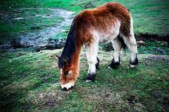 Peluche (rogalonso) Tags: caballo fuji finepix fujifilm invierno montaa x100