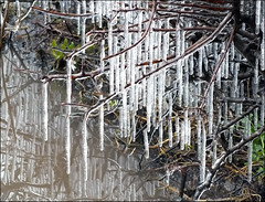Catkins of Ice (jo92photos) Tags: uk england sculpture ice nature rural reflections countryside spring natural explore hedge puddles icicles countrylife hedgerow brrrrrrr ©allrightsreserved westberkshire winterconditions jo92photos wildlifecountryside hs20exr