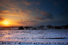 Colouring The Snow (Natasha Bridges) Tags: morning trees sky snow cold clouds sunrise dawn countryside spring shropshire fields wrekin skeletaltrees