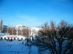 sunny morning after 2 days' blizzard, after reunit... (dabbog) Tags: life god dream son yukiko asoh