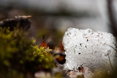 Moss & Snow