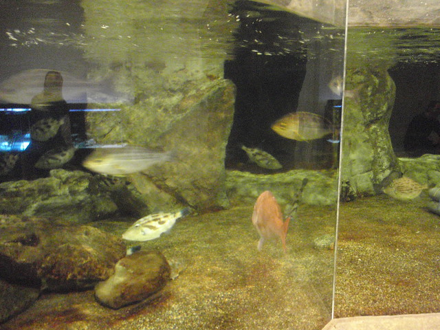 魚の水槽がたくさん (゜)) キッズプラザ大阪
