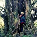 Olivia in Elham tree thumbnail