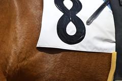 20130405-_DSC4394 (Fomal Haut) Tags: horse japan nikon nagoya 80400mm d4   14teleconverter  d800e