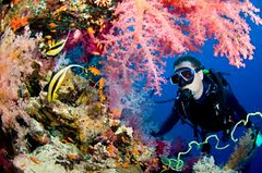 diving (leisure travel egypt 2013) Tags: life red sea people opportunity start for this underwater time you who like first scuba diving visit we course have your will experience be program if chance safe padi try aqualung would miss simple could carry beginner marsa alam discover planned recommend on decide so shouldnt