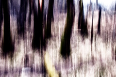 Nature (Abstract) #25 (Emmett Hunt) Tags: england abstract colour tree landscape lakedistrict explore 18105mm nikond300s