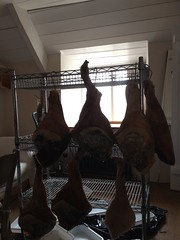 Ham curing upstairs at River Cottage HQ (shortblue) Tags: ham produce jamon offsite rivercottage rivercottagehq surevine uploaded:by=flickrmobile flickriosapp:filter=nofilter