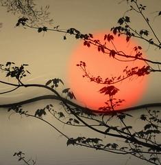 L'Orange (Amiela40) Tags: orange tree leaves wave vague feuilles ondulation simplysuperb awardtree