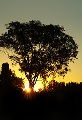At the end of my street (judith511) Tags: sunset silhouette eucalypt gumtree sunflare naturethroughthelens