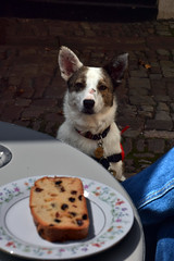 Henry's Cafe (Jainbow) Tags: henryscafe monmouth tea cake cobbles cafe jainbow lina collie colliecross dog rescue