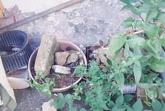 Plants (pytorsavnt) Tags: plants film 35mm olympusom1 analog kodacolor