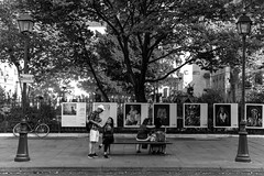 IMG_0662 (Lens a Lot) Tags: paris | 2016 carl zeiss distagon 35 mm f28 1973 6 blades iris qbm f8 black white street photography vintage manual classic rare german west germany prime lens fixed noir et blanc monochrome extrieur plante arbre