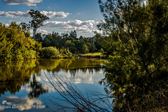 WINDERMERE PARK (len.austin) Tags: afternoon australia brisbane jindalee landscape lateafternoon nativetrees pelican queensland reflections water