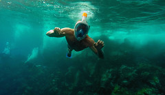Guadeloupe (Ross Biddle) Tags: caribbean guadeloupe french france tropical exotic amazing nature diving snorkelling ocean sea hot summer explore travel nikon d5100 35mm turtle