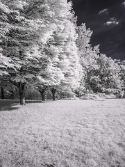 Hilly Fields Park (blackwoodse6) Tags: infrared blue trees foilage white 720nm park london brockley lewisham se13 se4 outdoor canong10 uk england hillyfieldspark londonparks