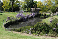 Wisteria Gardens (zassle) Tags: flora flower wisteria camera:make=fujifilm geocountry exif:focallength=266mm geocity geostate exif:lens=xf18135mmf3556rlmoiswr geo:lat=33803702777778 exif:aperture=56 exif:isospeed=200 exif:model=xpro2 exif:make=fujifilm geo:location=wisteriagardens geo:lon=15099747777778 camera:model=xpro2
