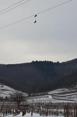 Chaussures lectriques  -  Electric shoes   (1) (Philippe Haumesser Photographies) Tags: winter snow france electric forest landscapes shoes hiver vineyards alsace neige vignes vignoble paysages fort elsass chaussures lectricit lectrique wintzenheim nikond7000 rememberthatmomentlevel1 rememberthatmomentlevel2