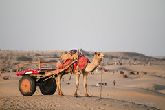 IMG_4779 (Tarun Chopra) Tags: travel india canon photography gurgaon rajasthan touristattractions indiatravelphotography rajasthaninwinters gurugram