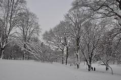 DSC_0040 (lbreiss34) Tags: nyc snow nemo centralpark great lawn belvederecastle