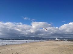 Beach (mockstar) Tags: losangeles davidpoe desanimaux