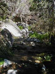 "Spring 4A in Pajarito Canyon • <a style=""font-size:0.8em;"" href=""http://www.flickr.com/photos/93261507@N06/8484047662/"" target=""_blank"">View on Flickr</a>"