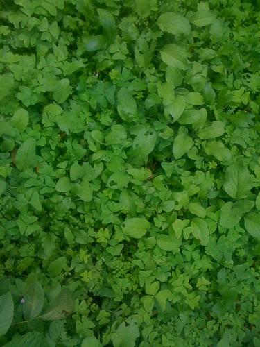 salad and er companion plants
