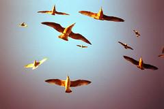 (auspices) Tags: uk sea sun film birds set 35mm brighton gull slide yashica t4