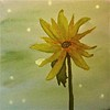 """Snow Daisy • <a style=""""font-size:0.8em;"""" href=""""http://www.flickr.com/photos/34168315@N00/8559995605/"""" target=""""_blank"""">View on Flickr</a>"""