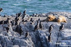 Ushuaia, Argentina - Sea Lions & Cormorants (GlobeTrotter 2000) Tags: travel boy sea patagonia lighthouse mountain snow tourism be