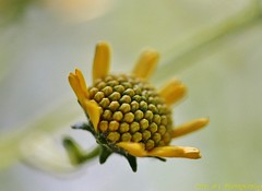 The Beauty of Spring7 (Photography Peter101) Tags: flowers macro nature yellow canon spring